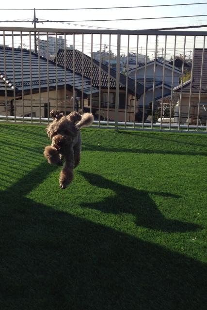 ワンちゃんも楽しく走り回って喜んでおります。