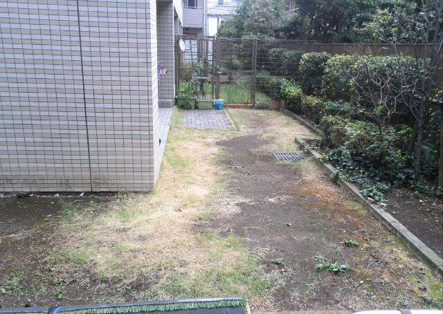 人工芝施工前(天然芝の状態)